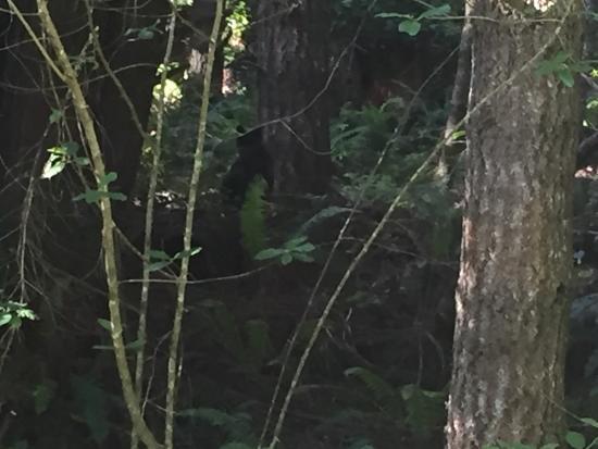 Tall Trees Grove: photo0.jpg