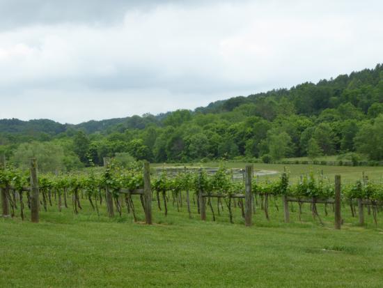 Goose Creek Farm and Winery - Otium Cellars: Vines