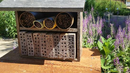 Häagen-Dazs Honey Bee Haven