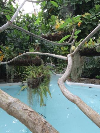 La serre tropicale photo de parc olbius riquier hy res - Piscine tropicale france ...