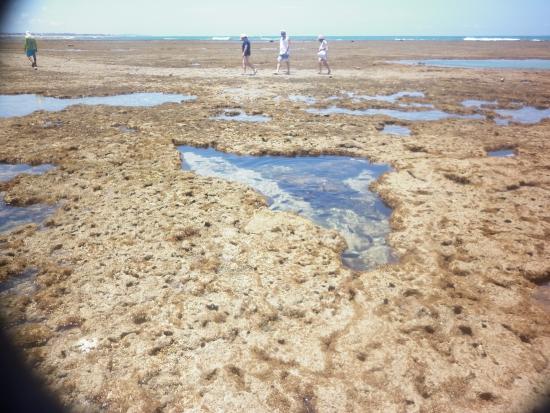 Jangada porto do galinhas picture of natural pools of for Piletas naturales argentina