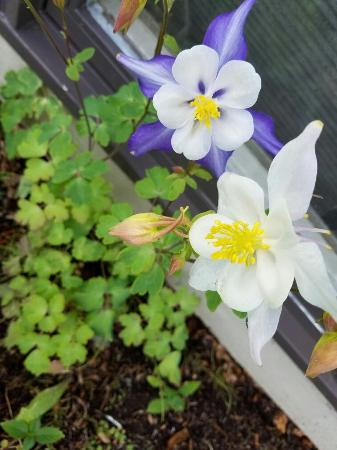 The beautiful gardens are blooming at Susitna Sunsets bed and breakfast