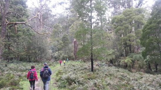 Dandenong Ranges & Knox Visitor Information Centre