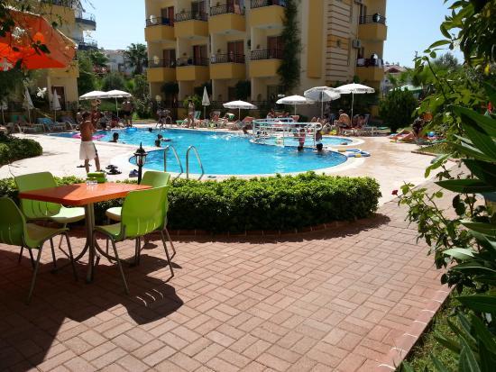 Hotel Summer Rose: summer rose