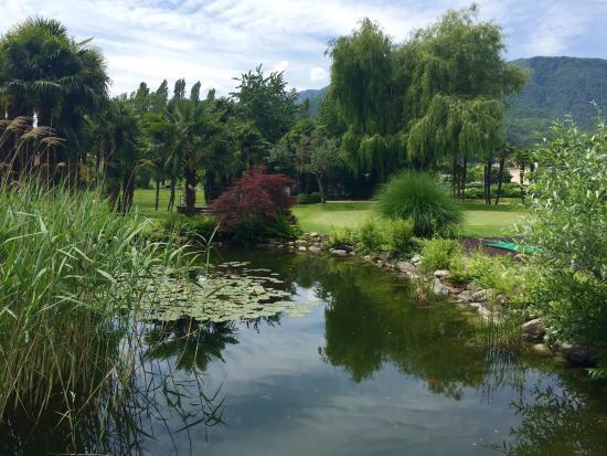 Losone, İsviçre: Il bellissimo stagno popolato da rane e ninfee