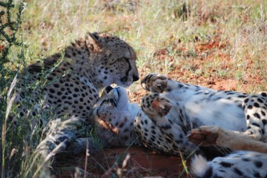 Zdjęcie Tswalu Kalahari Game Reserve