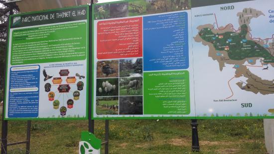 Theniet El Had National Park