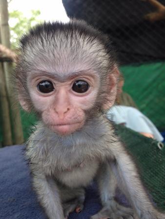 Vervet Monkey Foundation: Felica