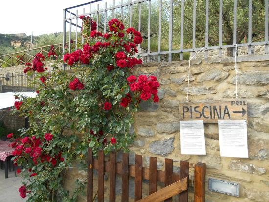 Agriturismo Il Torrino: Roses blooming everywhere...