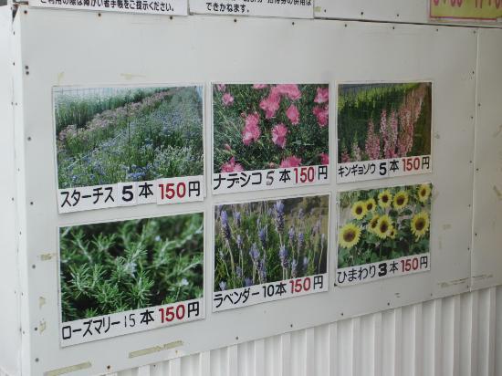 Poppinosato Tateyama Family Park : 温室栽培(切り花)一覧
