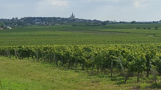 Vaudelnay, France : La Vigne et la Collégiale du Puy-Notre Dame