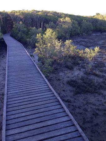 Aeroglen, Australia: Mangrove Boardwalk next to Cairns Airport