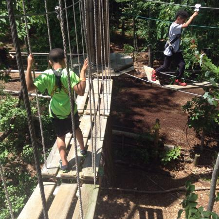 Travelers who viewed Go Ape Treetop Adventure Course also viewed