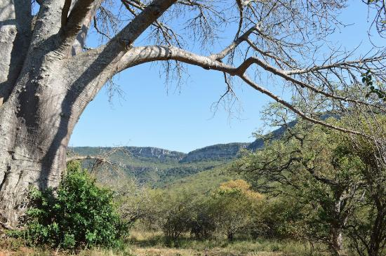 Louis Trichardt, Sydafrika: The view from the baobab tree