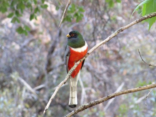 Portal, AZ: This is an Elegant Trogon we saw on the first hike we took