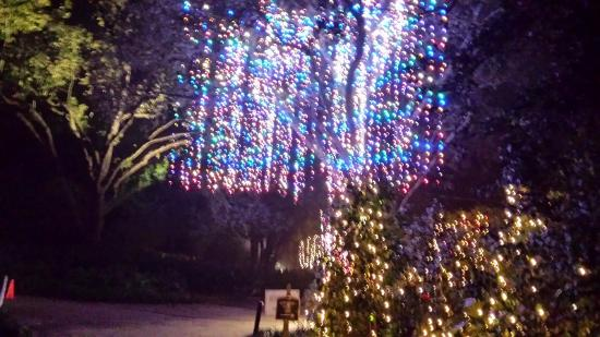 Belingrath gardens Christmas lights only one tree Picture of