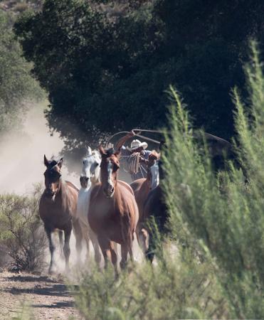Baja Rancho La Bellota: Taking photographs of the horses and caballeros.