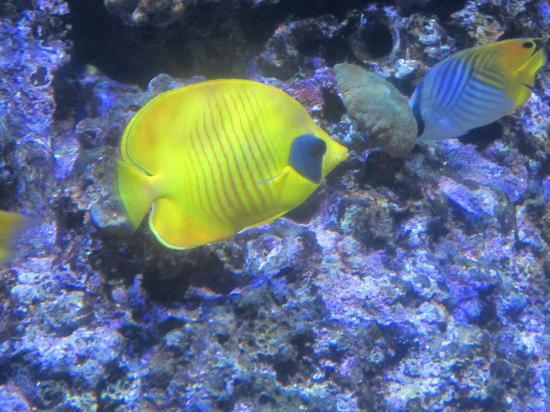 Pesci tropicali foto di acquario civico milano for Contenitore per pesci