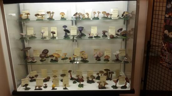 Civico Museo Didattico di Scienze Naturali Mario Strani