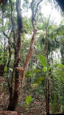 Maachli Farmstay: View from the hut