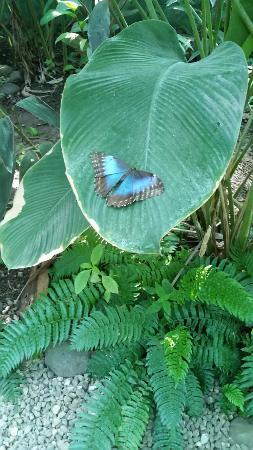Tambor, Costa Rica: 20160524_104457_large.jpg