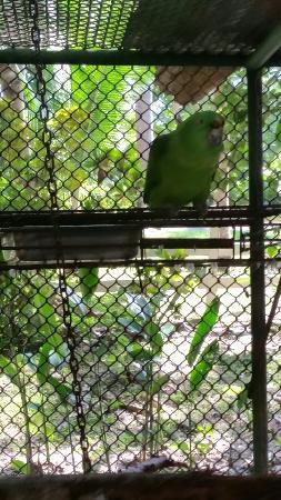 Tambor, Costa Rica: 20160524_103433_large.jpg