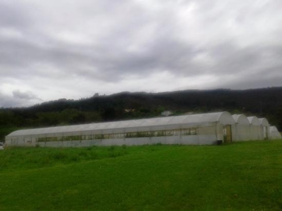 Lezama, España: Hivernadero