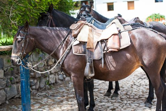 Imbabura Province, Ecuador: Hacienda Zuleta: Stable and horses