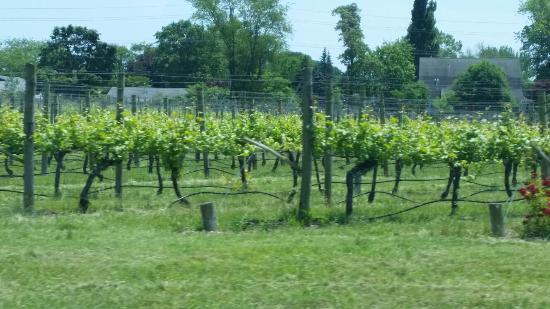 Hawk Haven Vineyard and Winery: 20160604_124306_large.jpg