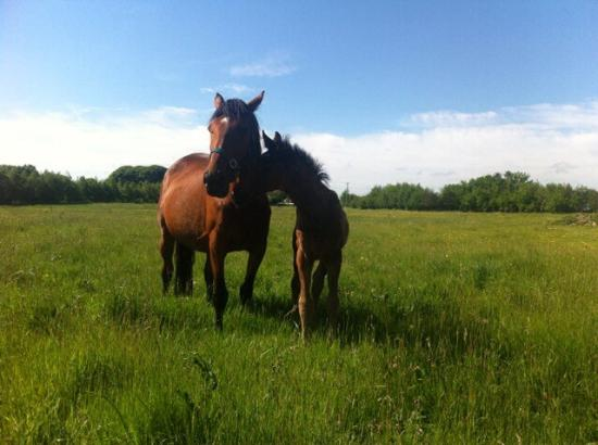 Kilmaine, Irlanda: Horse and foal within the grounds