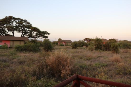 Kilima Safari Camp: The tents are in the scrub