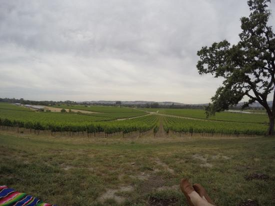 Scribe Winery : Scribe has nice wines, but the view may be the best part.  Reservations are required.  This is r