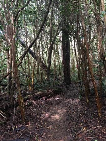 Nu'alolo Trail: photo3.jpg