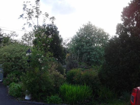 Moher House Bed and Breakfast: Amazing garden!