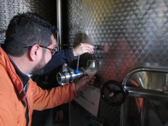 Casablanca Valley Wine Route: Got to try some fresh wine still early in the fermentation