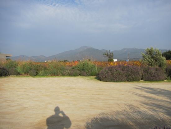 Casablanca Valley Wine Route: Beautiful vista at Quintay