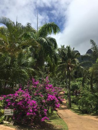 Anahola, HI: Wenn Kauai das Paradis ist, ist das das Zentrum!