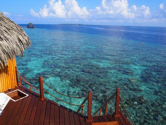 Truly Paradise