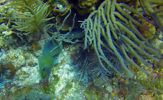 Barefoot Divers: Moral eel