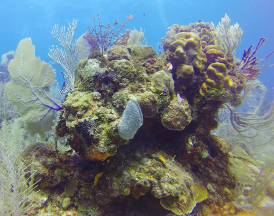 Barefoot Divers: Just a glimpse of some of the coral