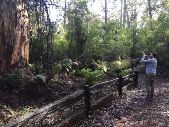 Manjimup, Australia: Four Aces