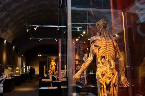 Museum Exhibition Human Body