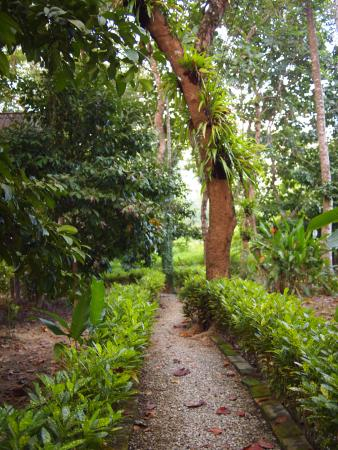 Khao Sok Valley Lodge: Path leading to the cabins