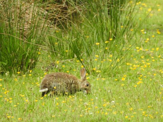 Arne, UK: Rabbits were plentiful among the meadows