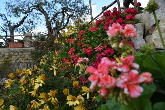 i terrazzi in fiore - Picture of Dal Patriarca, Vico Equense ...