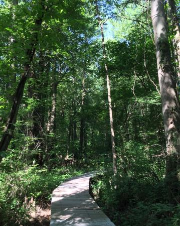 Prince Frederick, MD: Boardwalk path through Battle Creek Swamp