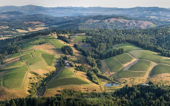 Yamhill, OR: WillaKenzie Estate Aerial View