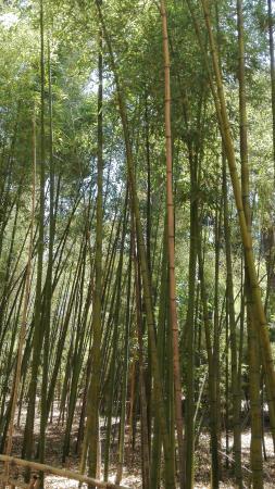 Bosque De Bambu Picture Of Jardin Jnan Sbil Fes Tripadvisor - Jardin-bambu