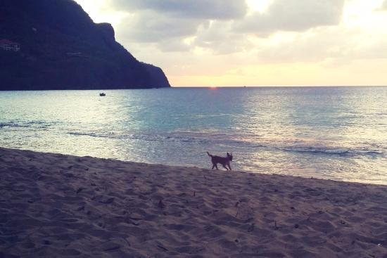 Lower Bay Beach: in front of Keegans watching sunset and dog play