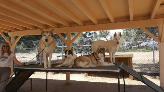 Lake Hughes, Kalifornien: Wolves just chillin